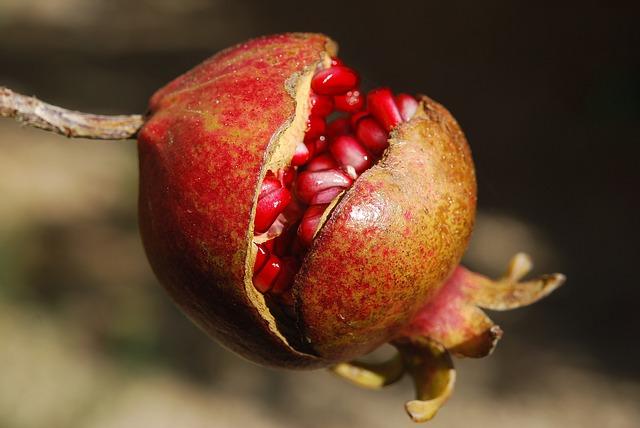 Melograno: cos'è, effetti benefici, coltivazione e potatura